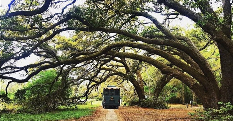 Tea Plantation Outdoor Activities Charleston Things to do vacation