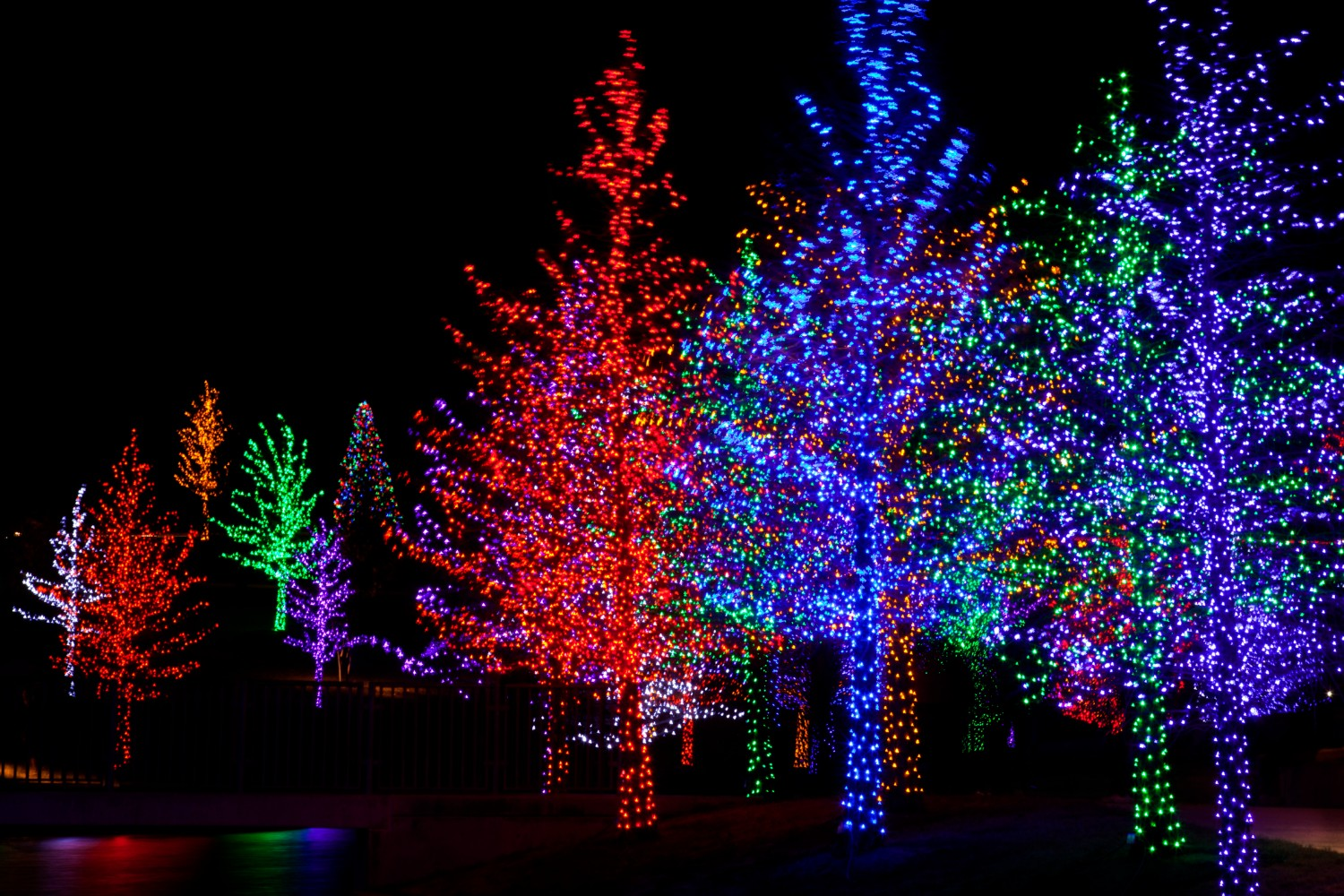 christmas lights at the James Island County Park Festival of Lights
